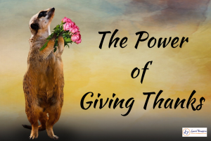 Meercat holding flowers and looking up. Text says The Power of giving Thanks